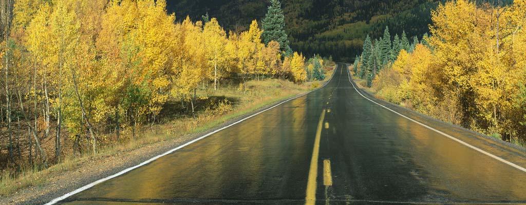 Wet road in fall.