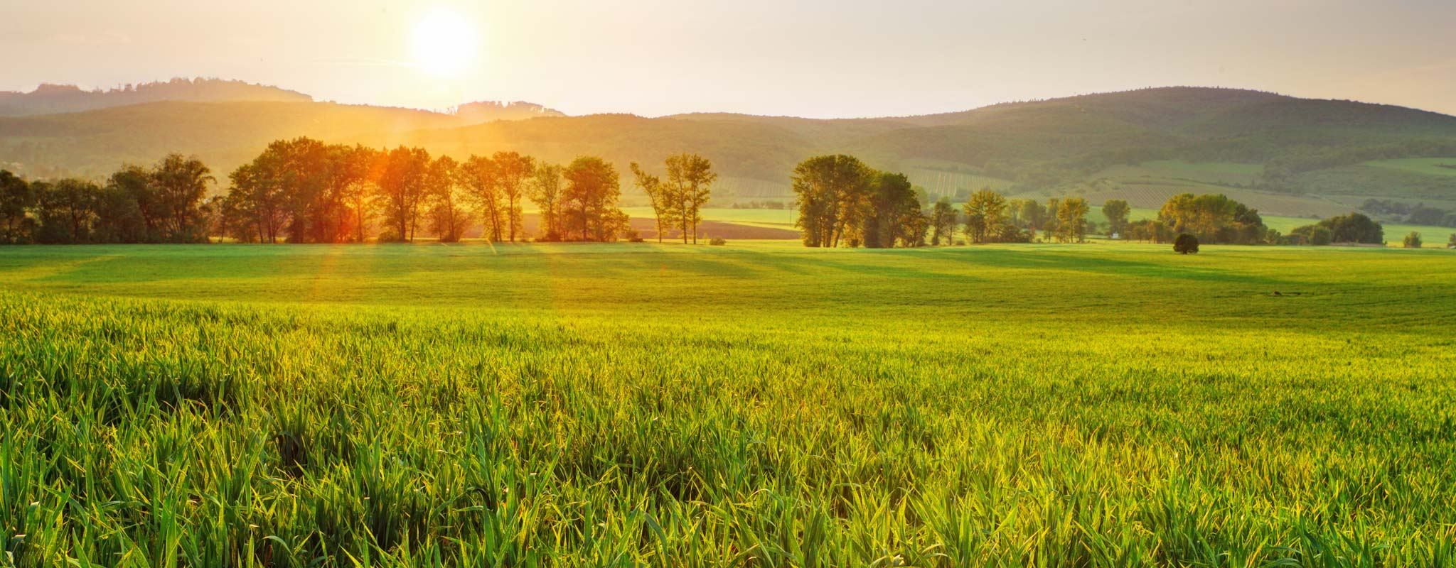 Sunrise on a lush green landscape.