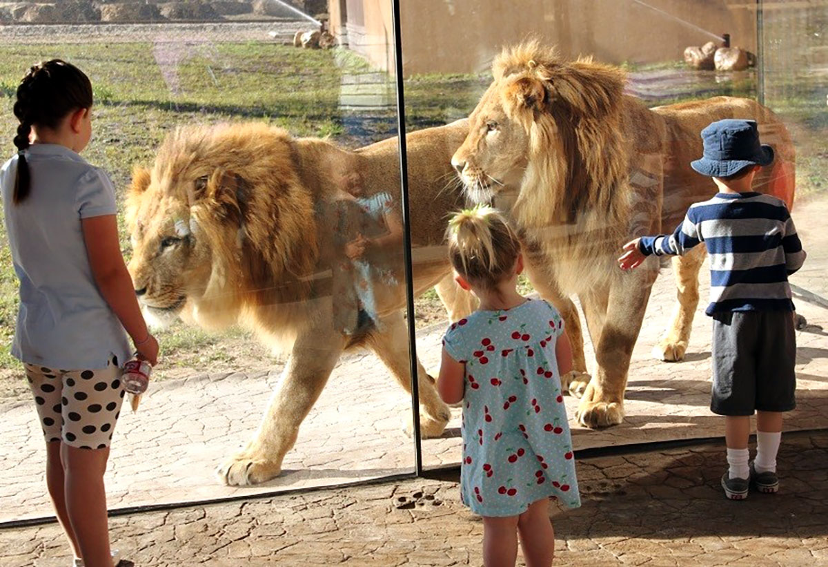 Children admiring Hogle Zoo's lions up close through glass
