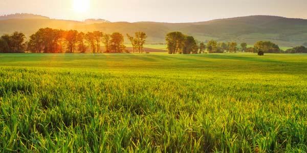 Sunrise on a lush green landscape.